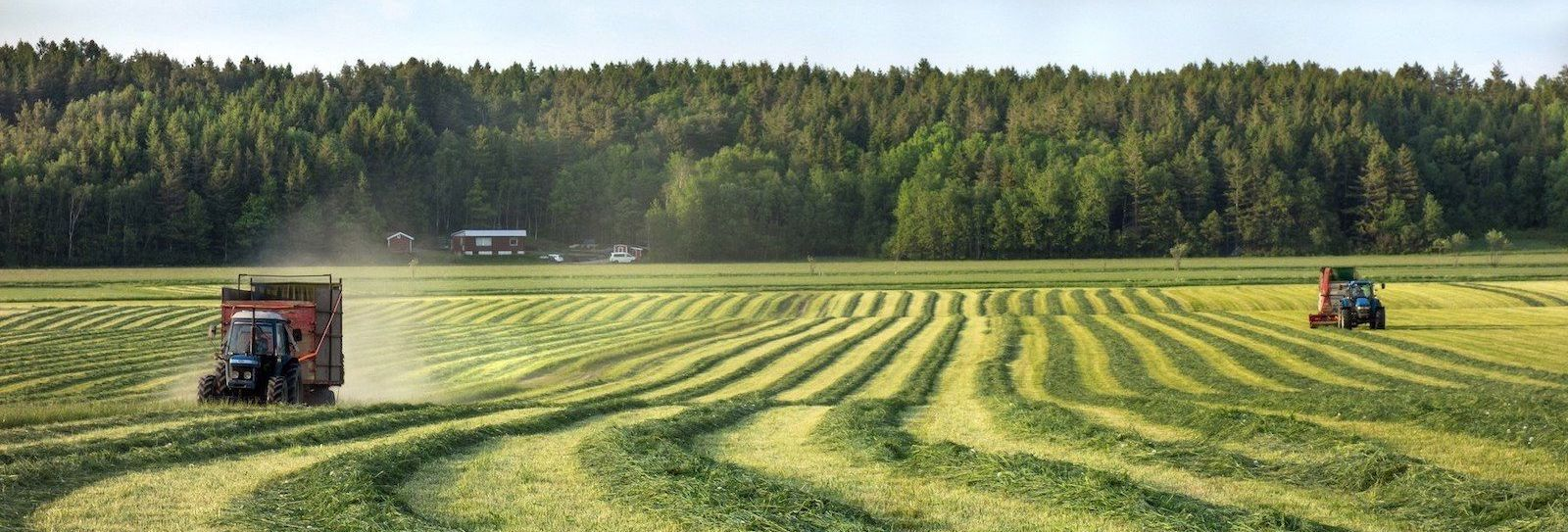 High Demand for Grains Makes Farmland a Promising Investment