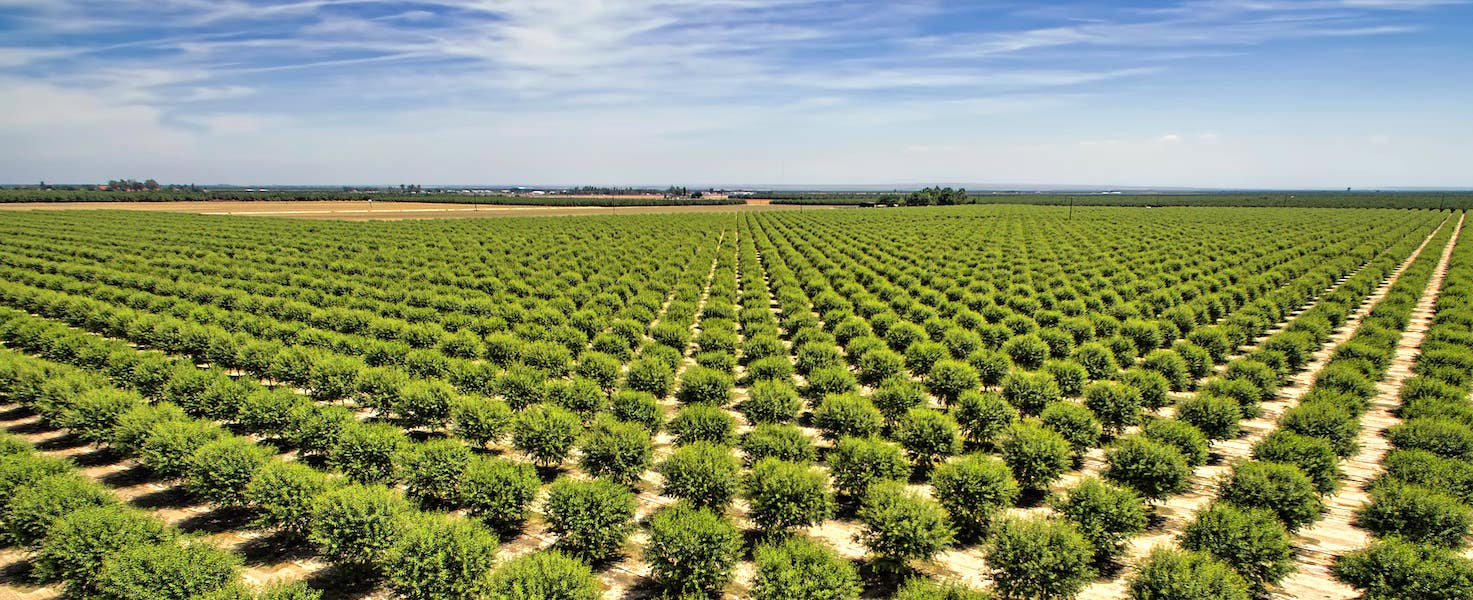 Why California is an agricultural powerhouse